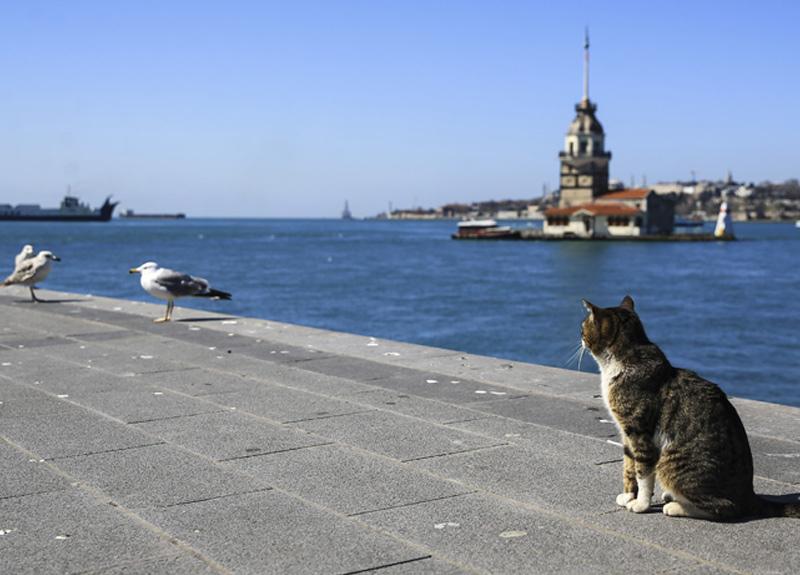 İstanbul'da koronavirüsle mücadele kapsamında alınan tedbirlere uyulduğu görüldü