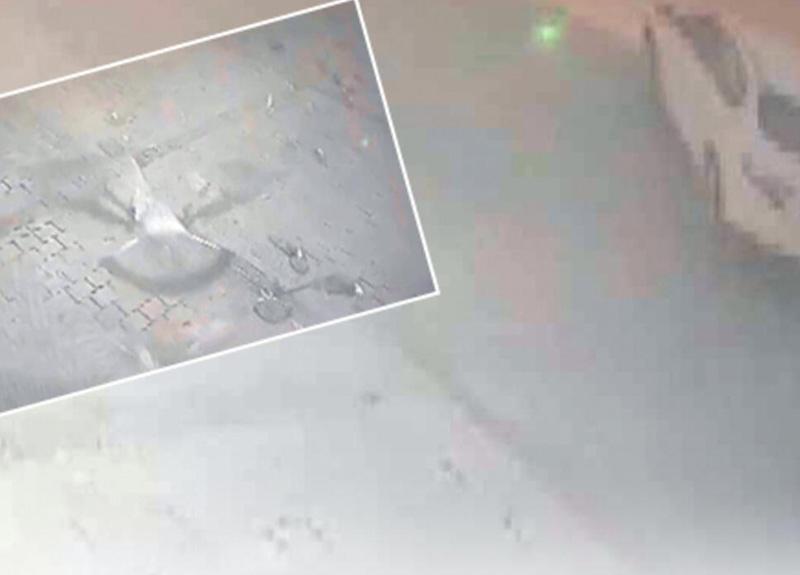 Eminönü'nde onlarca güvercini ezen sürücü gözaltına alındı
