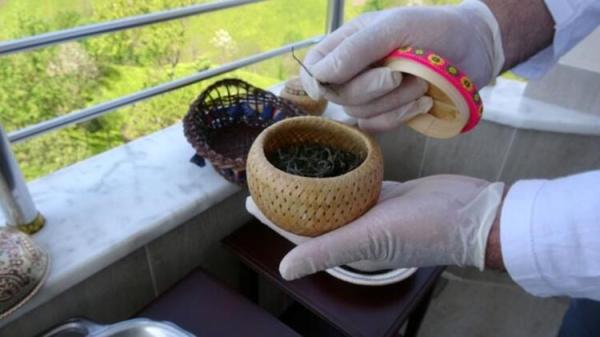 Beyaz çayın hasadı başladı! Kilosu 4 bin 500 lira!