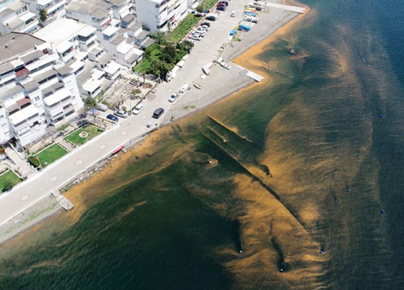 Marmara Denizi ALG patlaması sebebiyle kızıla büründü
