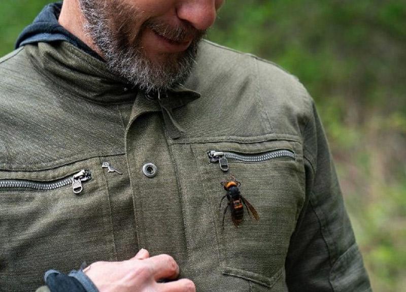 Koronavirüsten sonra şimdi de ABD'de katil arı paniği!