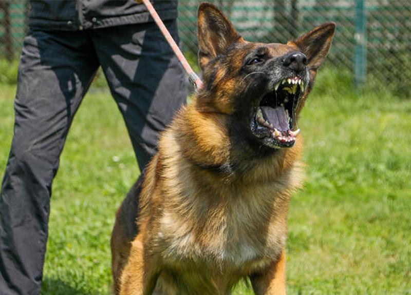 Köpekler için 'koronavirüslü hastayı tespit edebilir' çağrısı!