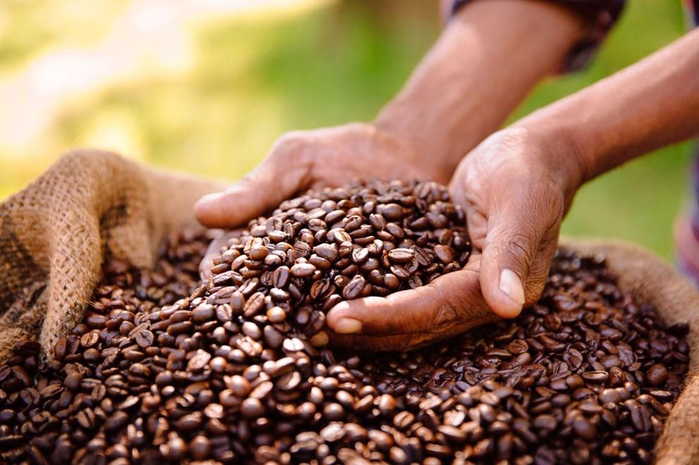 Yılda 700 milyar fincan tüketilen kahveyle ilgili tehlike çanları çalıyor: Kriz yolda