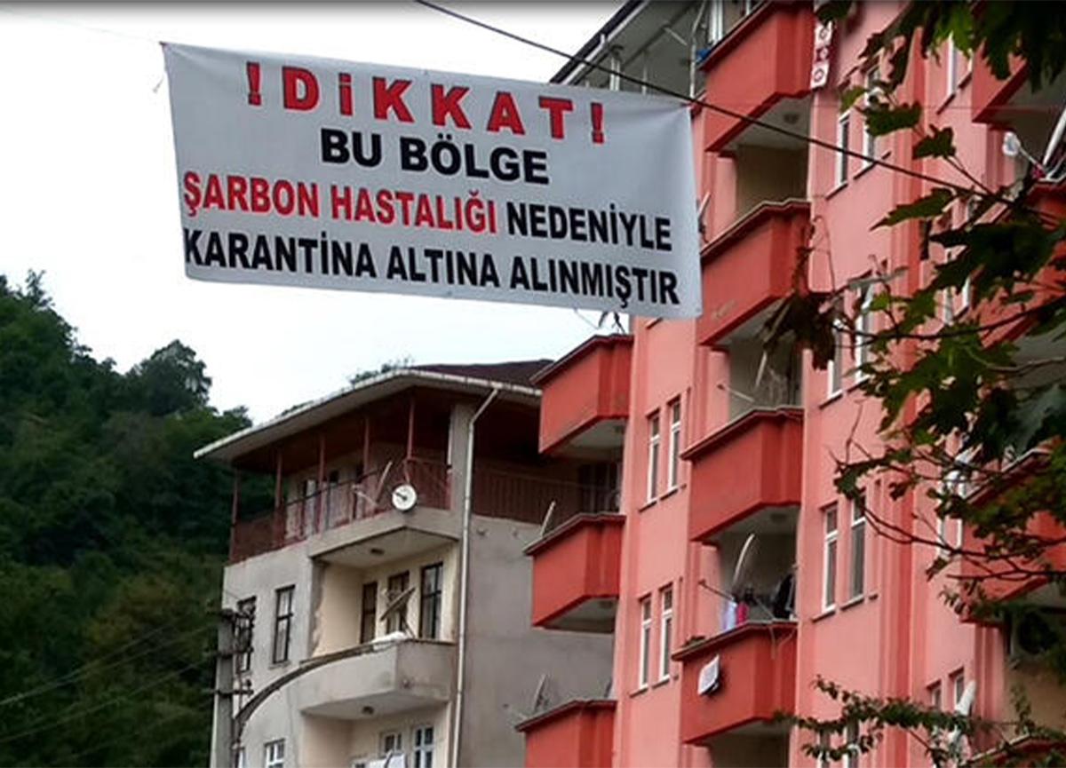 Trabzon Sürmene'de panik! Şarbon karantinası koronavirüs zannedildi!