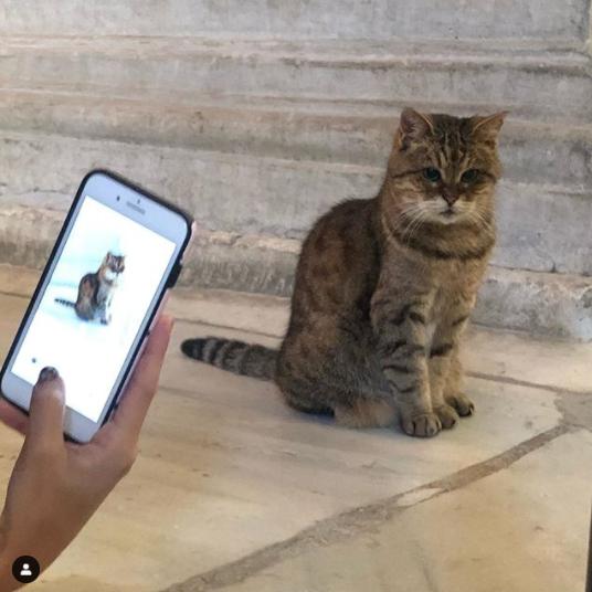 Ayasofya'nın meşhur kedisi Gli'nin durumu kötü... Ünlü kedi artık insandan uzak yaşayacak