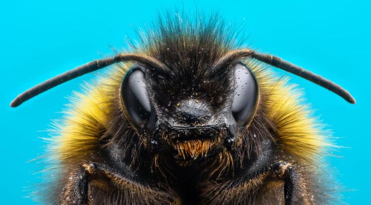Bilim insanlarından korkutan açıklama! Arılara neler oluyor?