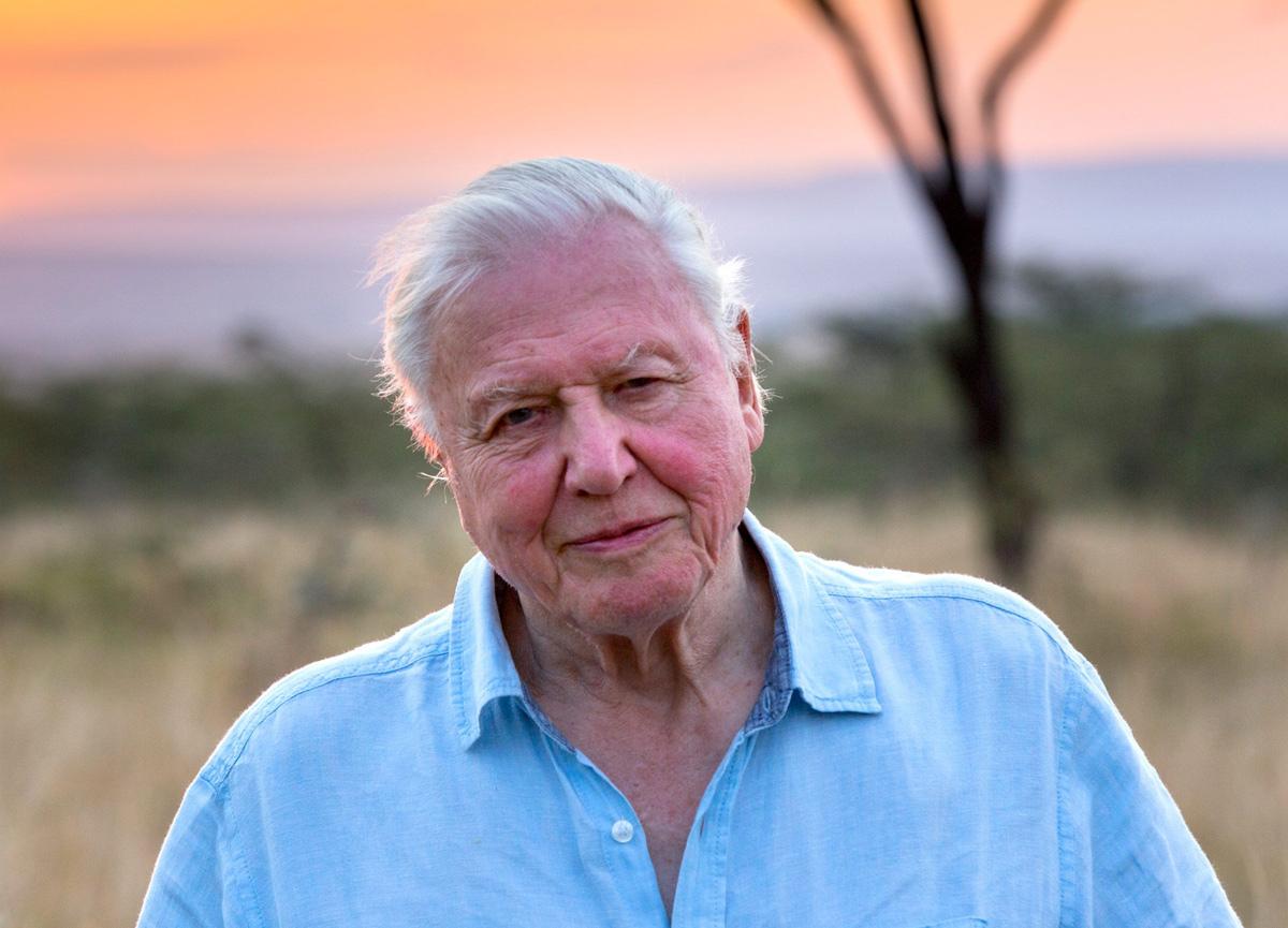 94 yaşındaki David Attenborough, Instagram'da rekor kırdı!