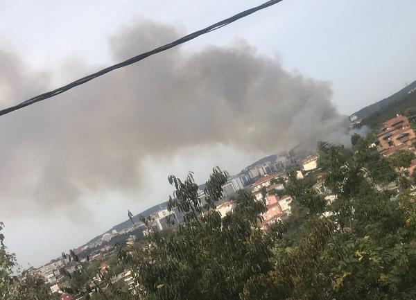 Beykoz'da ormanlık alanda yangın!