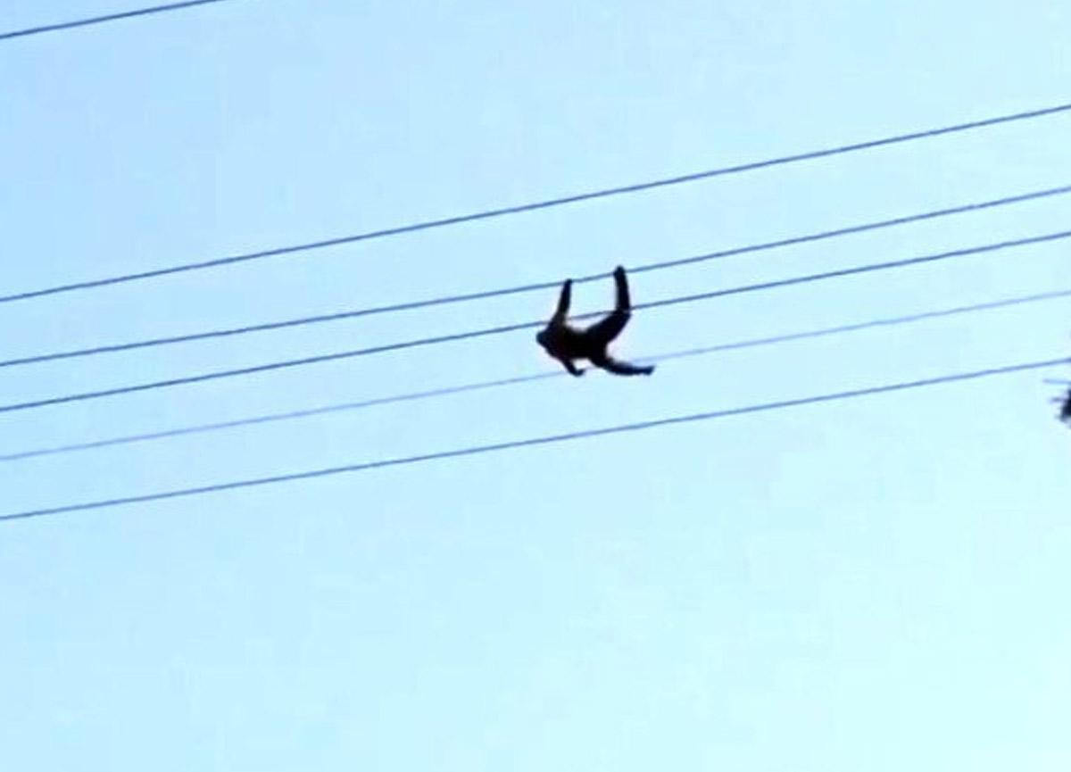 Hayvanat bahçesinden kaçan maymunu elektrik çarptı