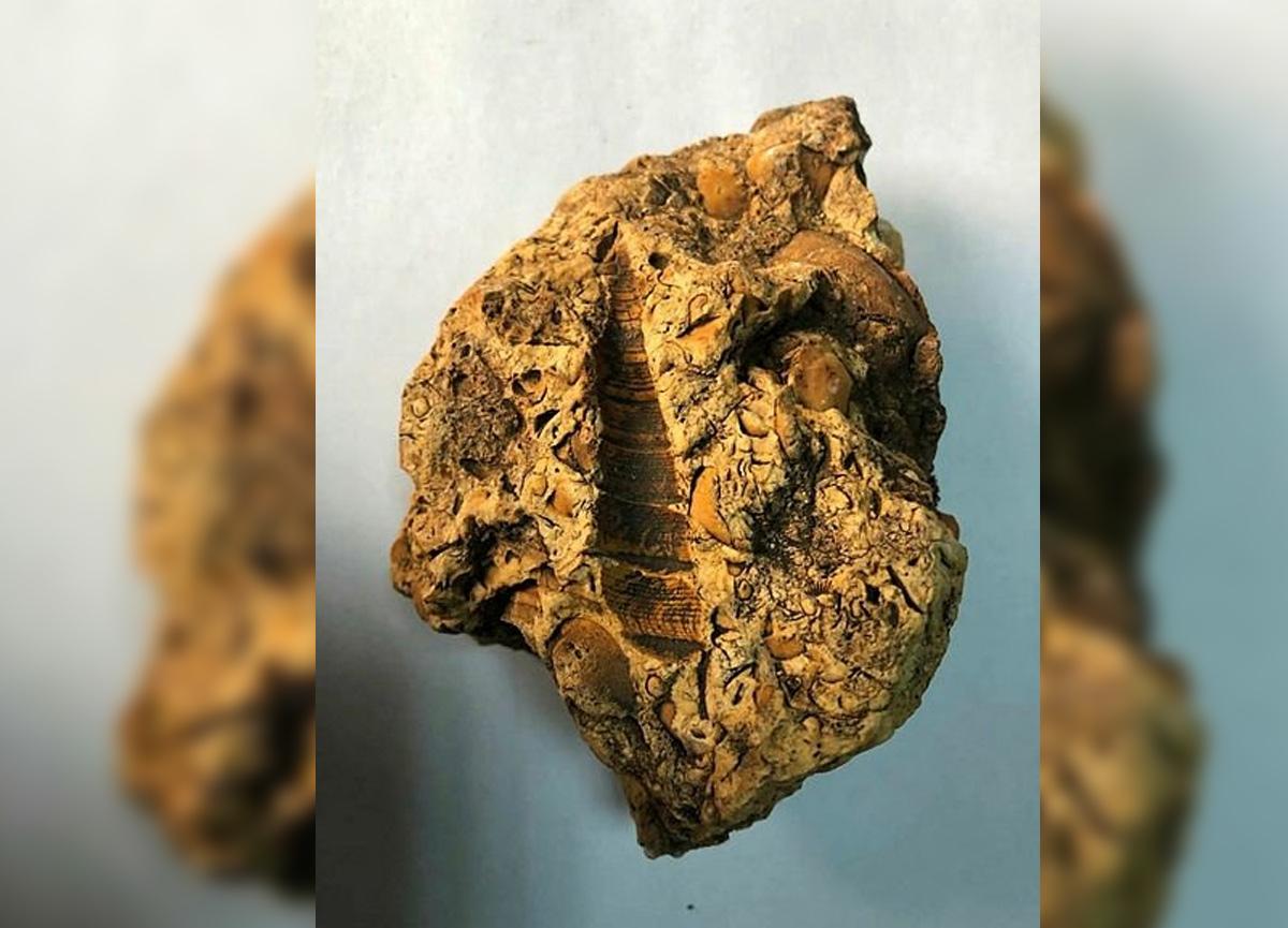 Türkiye'de 9 milyon yıllık fosil bulundu!