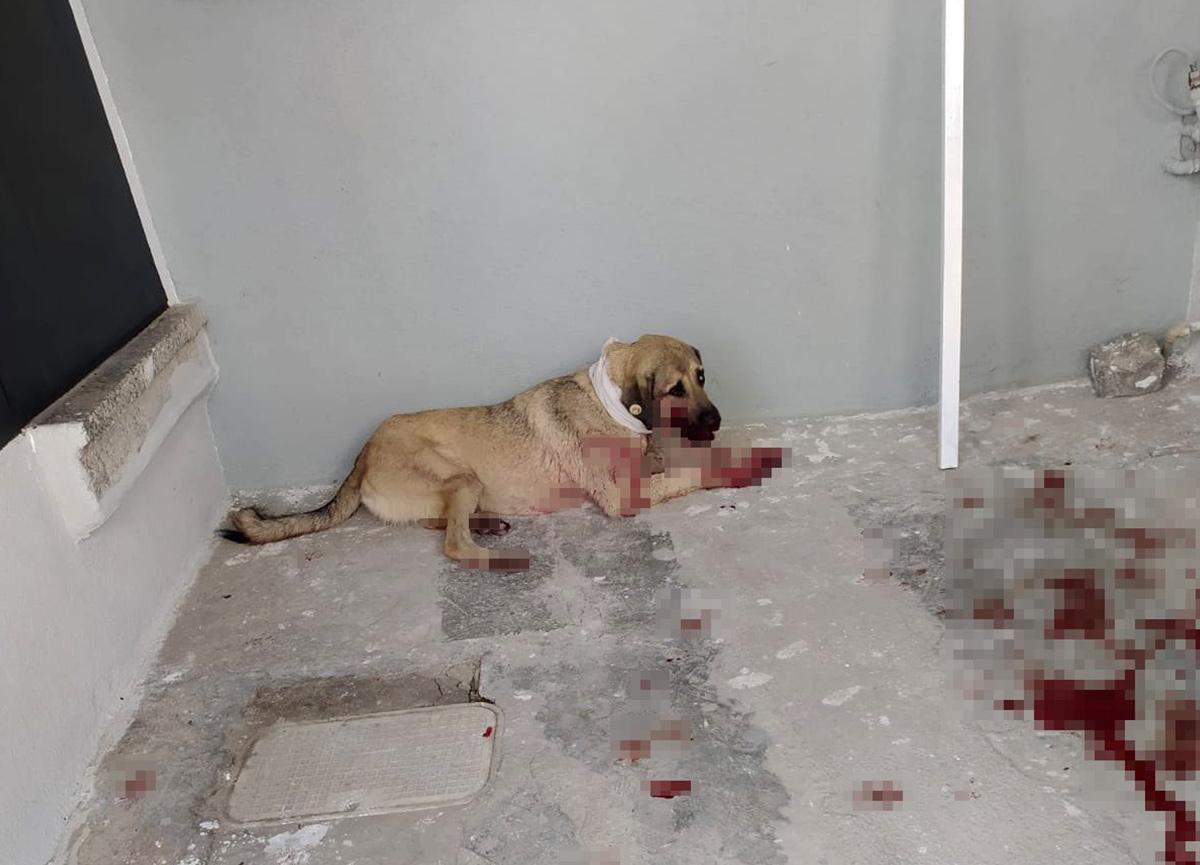 Hayvanları Koruma Günü'nde köpeğe iki el ateş ederek yaraladı!