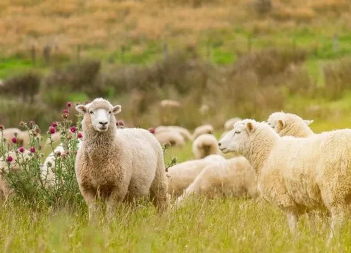 Bilim insanları açıkladı! İşte koronavirüsü taşıma riskine sahip olan 26 hayvan...