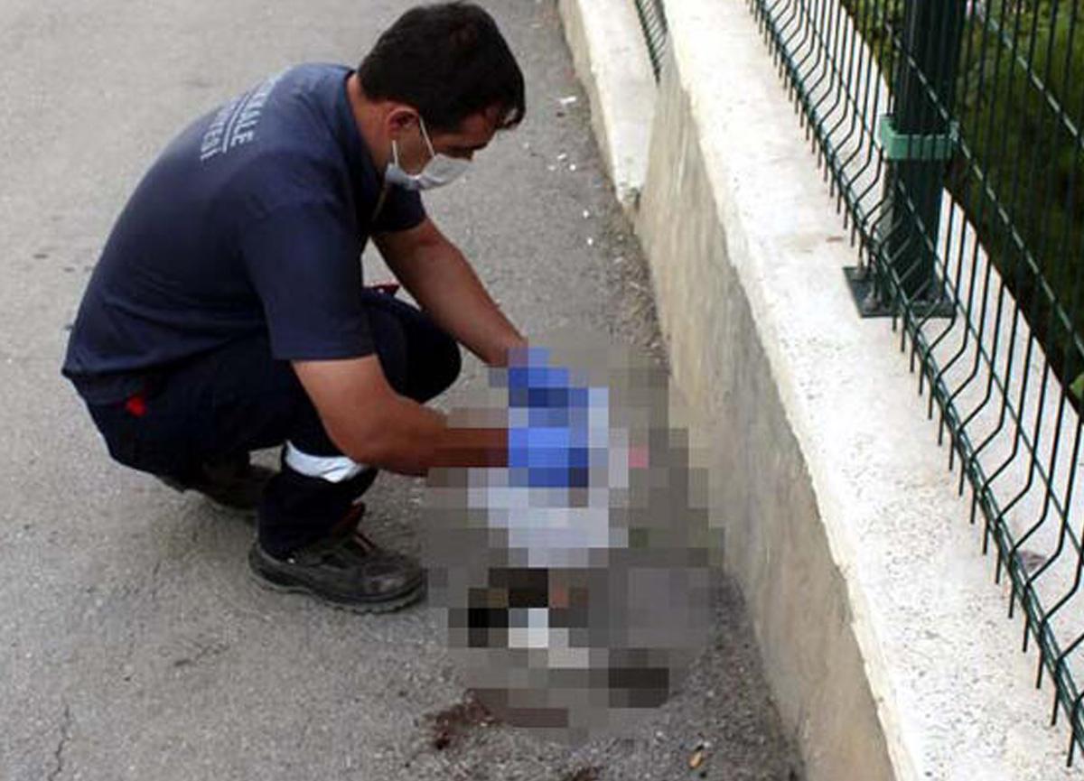 Kırıkkale'de yol kenarında bir yavru kedi, kafası ve ön ayakları kopmuş halde ölü olarak bulundu