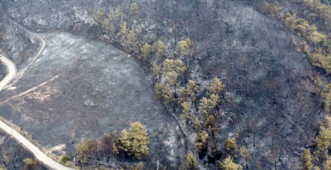 Yürek dayanmıyor! Ciğerlerimizi küle çeviren yangının doğaya verdiği tahribat böyle görüntülendi