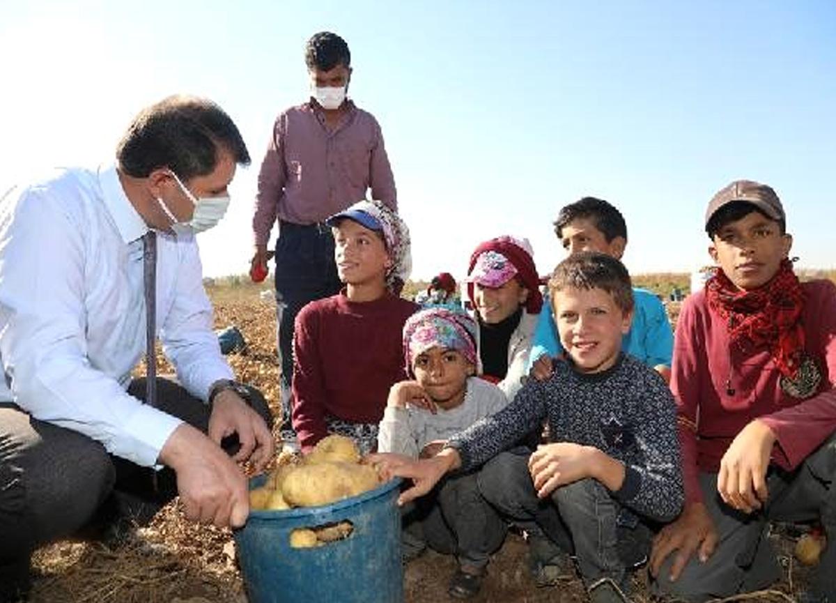 Sivas'ta eğitimden uzak kalan çocuklar için tarlalara çadır kurulacak