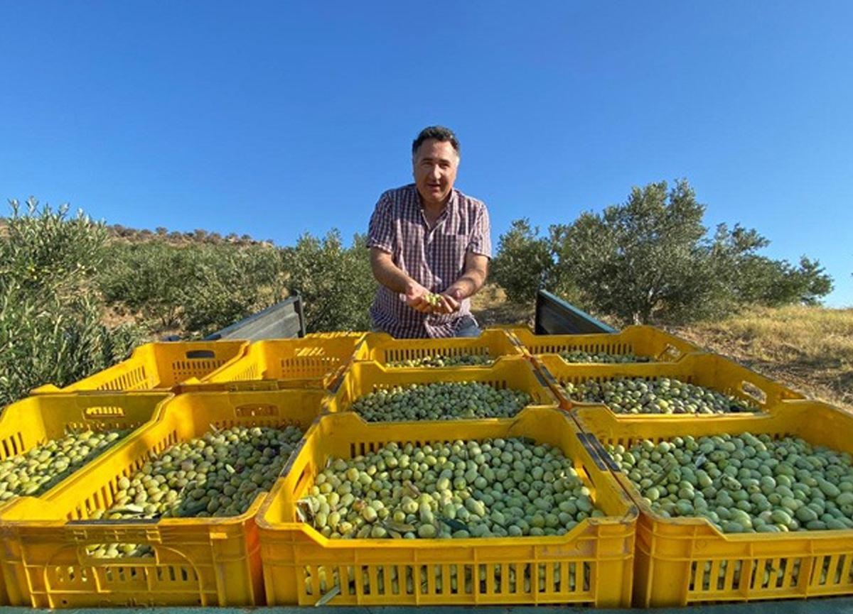 Sıtkı Gökmen Mıhcıoğlu'dan zeytin rekoltesi uyarısı