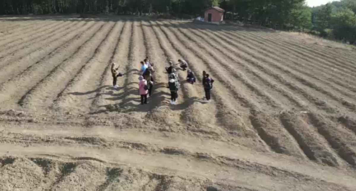 Karabük'te safran hasadı başladı: Kilosu 40 bin liradan satılıyor