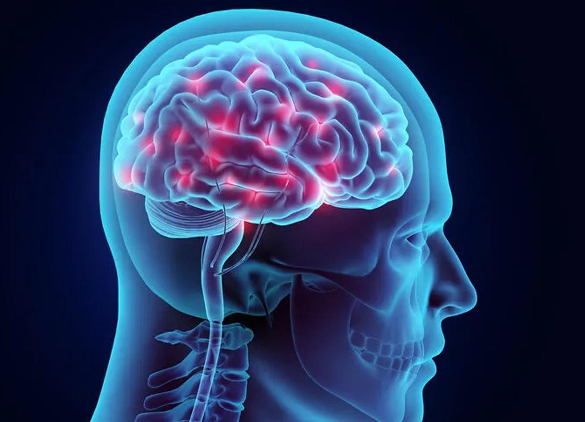 Bilim insanları, kafatasında daha önce ne olduğu tanımlanmamış bir organ bulduklarını açıkladı