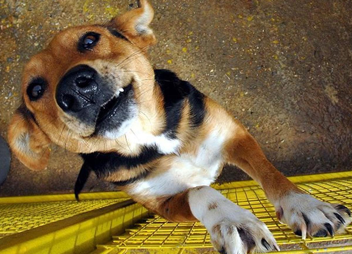 Çin'de bu yasağı 3 kez edenlerin köpekleri öldürülecek