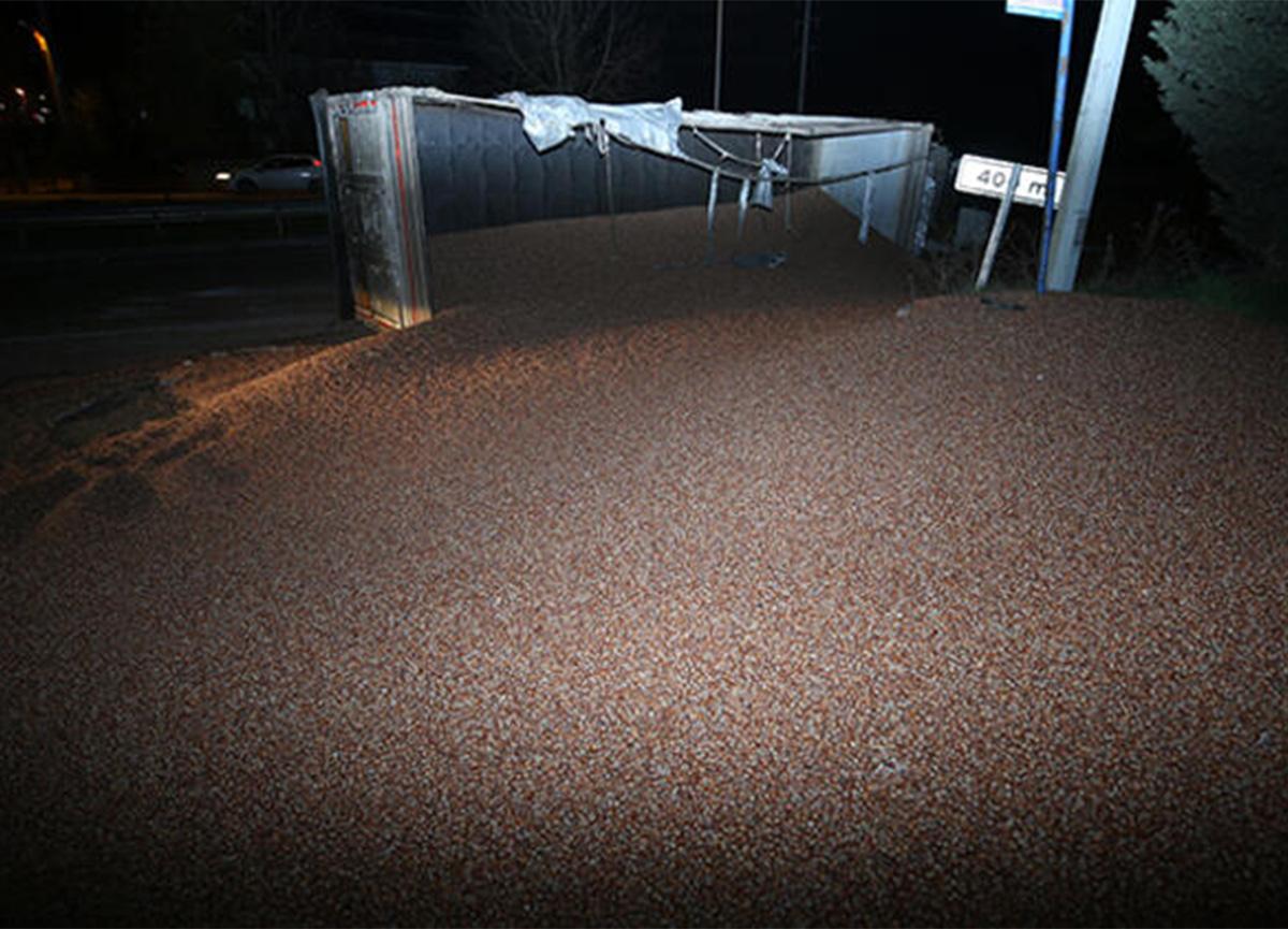 TIR'ın devrilmesi sonucu 20 ton fındık yola yayıldı