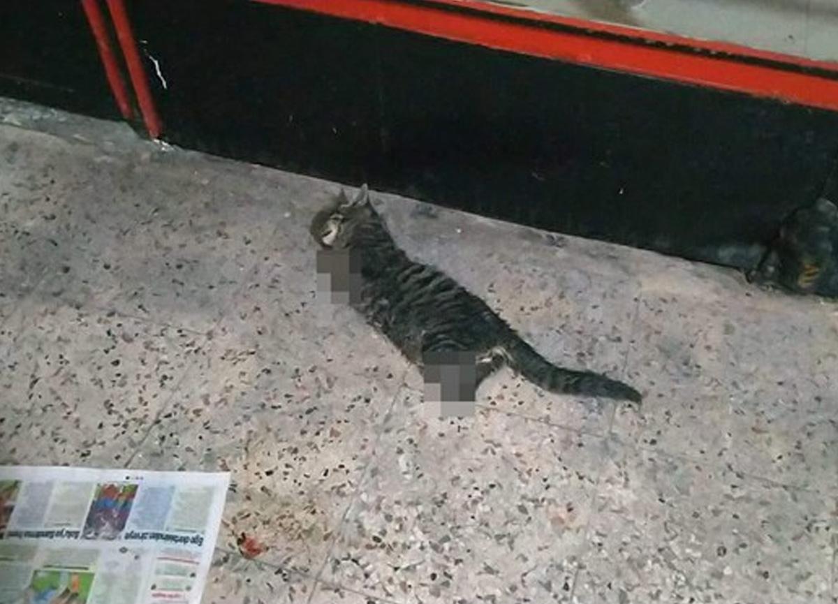 Kocaeli'nin Gölcük ilçesinde vahşet! 4 bacağı kesilmiş kedi ölüsü bulundu...