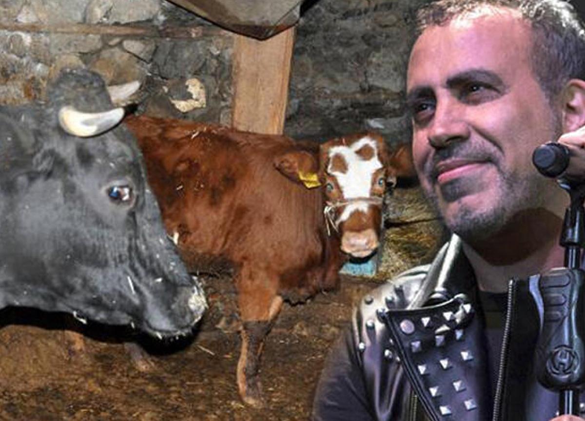 Şarkıcı Haluk Levent, Antalya'da cinsel saldırıya uğrayan 2 aylık buzağıyı satın aldı