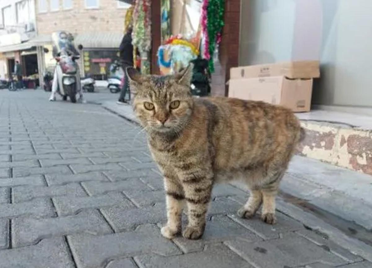 Muğla'da kaybolan kedi sayısının son günlerde hızla artması sonrası kentte satanist paniği yaşanıyor