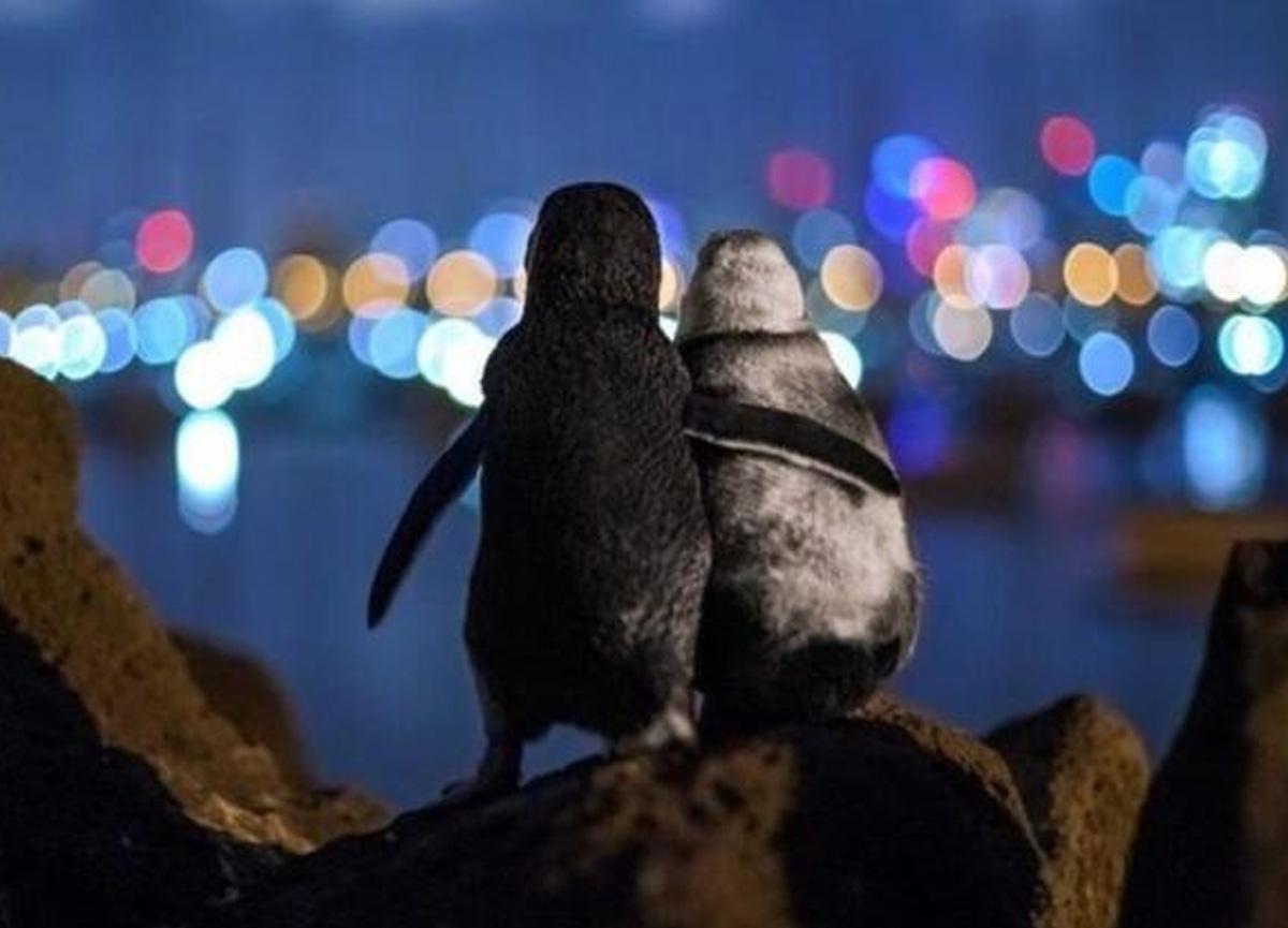 Dul penguenler sosyal medyada viral oldu! O fotoğraf büyük ödülü kaptı...