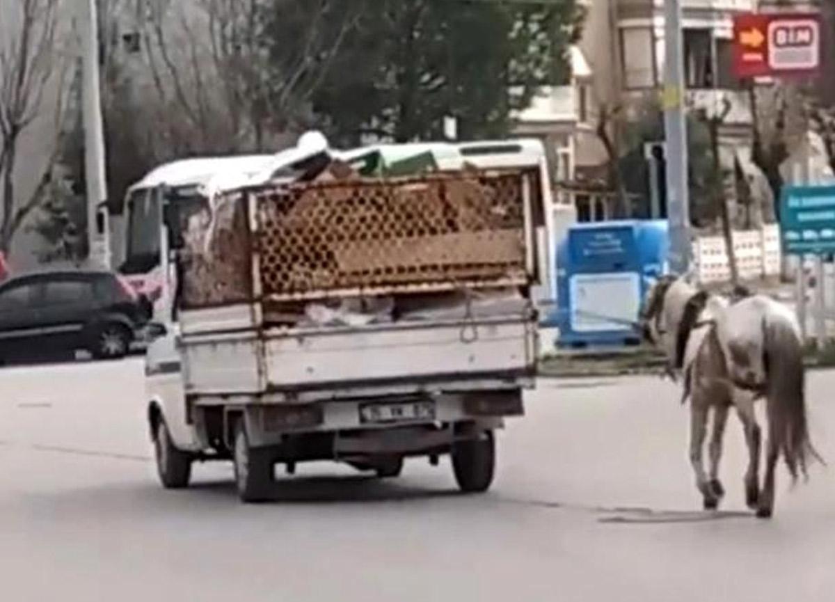 Zavallı atı kamyonetin arkasına bağlayıp sürükledi