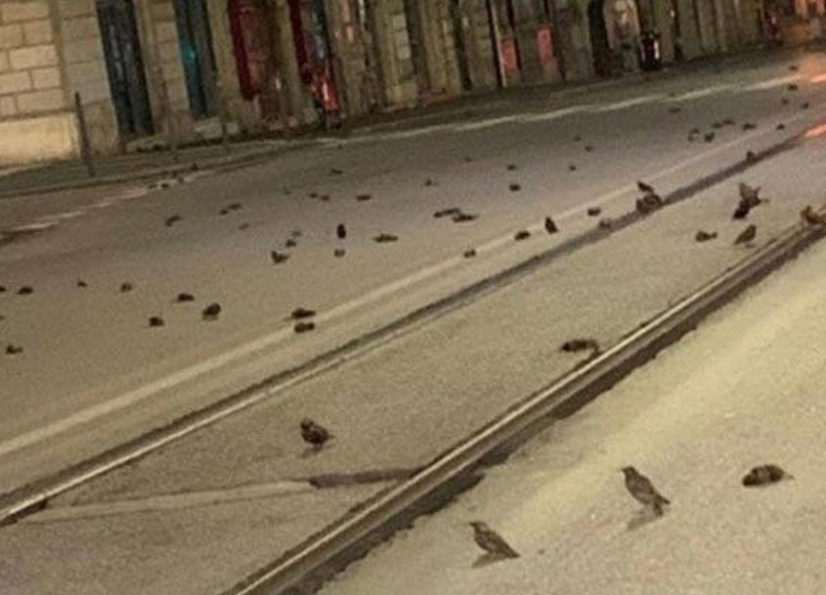 Yeni yılı kutlamak için kullanılan havai fişekler nedeniyle yüzlerce kuş öldü