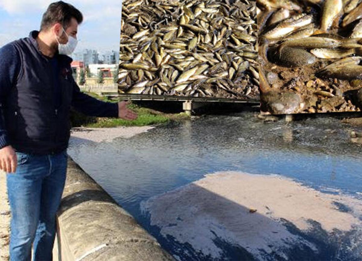 Antalya'da binlerce balık telef oldu!