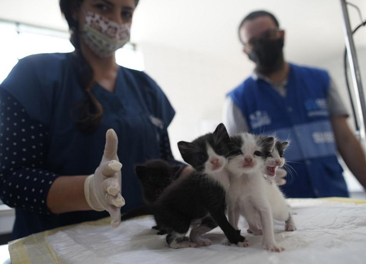 Evcil hayvanlara COVID 19 aşısı! Önlem için düşünülüyor...