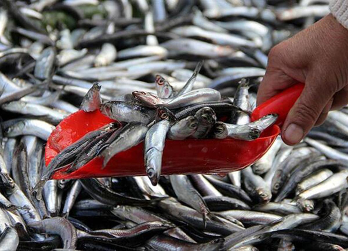 Bakanlık açıkladı! Hamside av yasağı uzatıldı