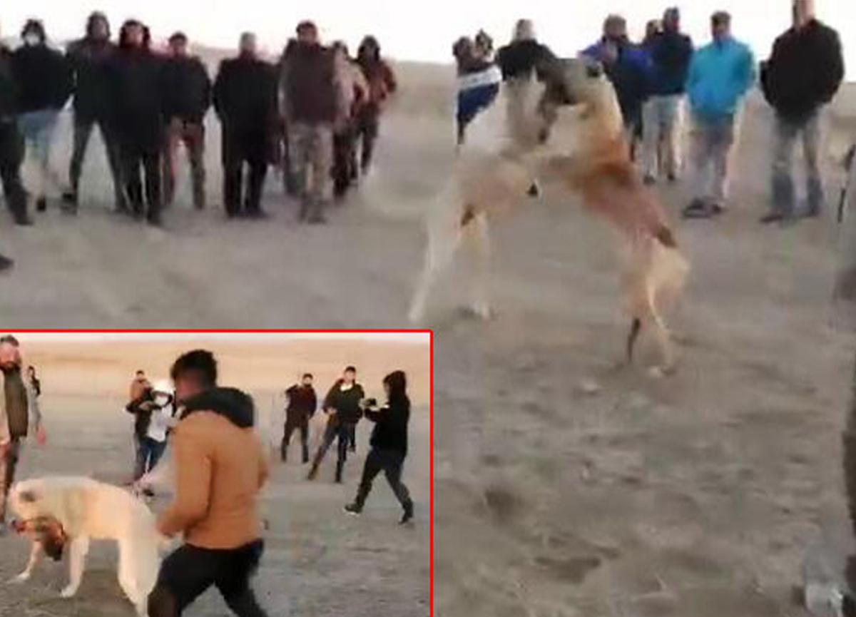 Konya'da köpekleri dövüştürüp paylaşanlara ceza kesildi