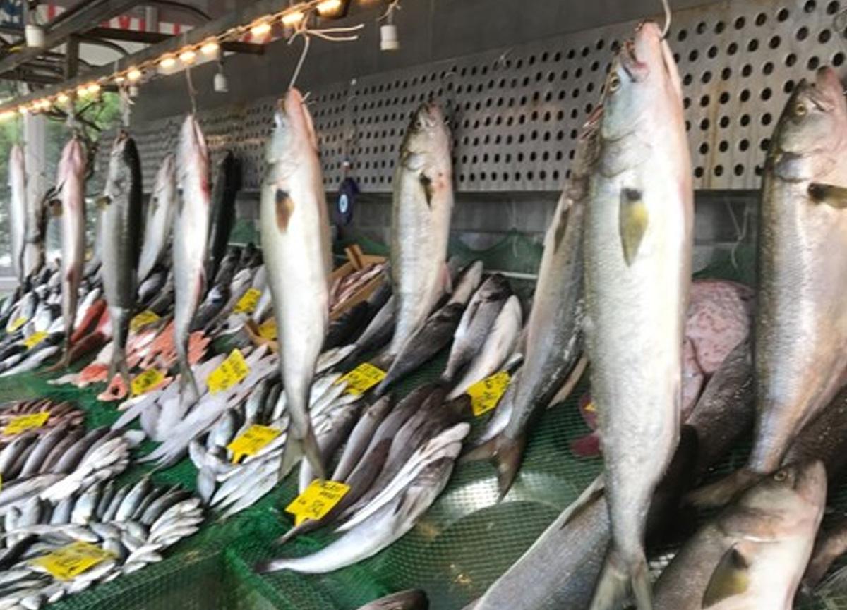En son 10 yıl önce görülen kofana balığında bolluk var: Kilosu 300'den 70 liraya düştü