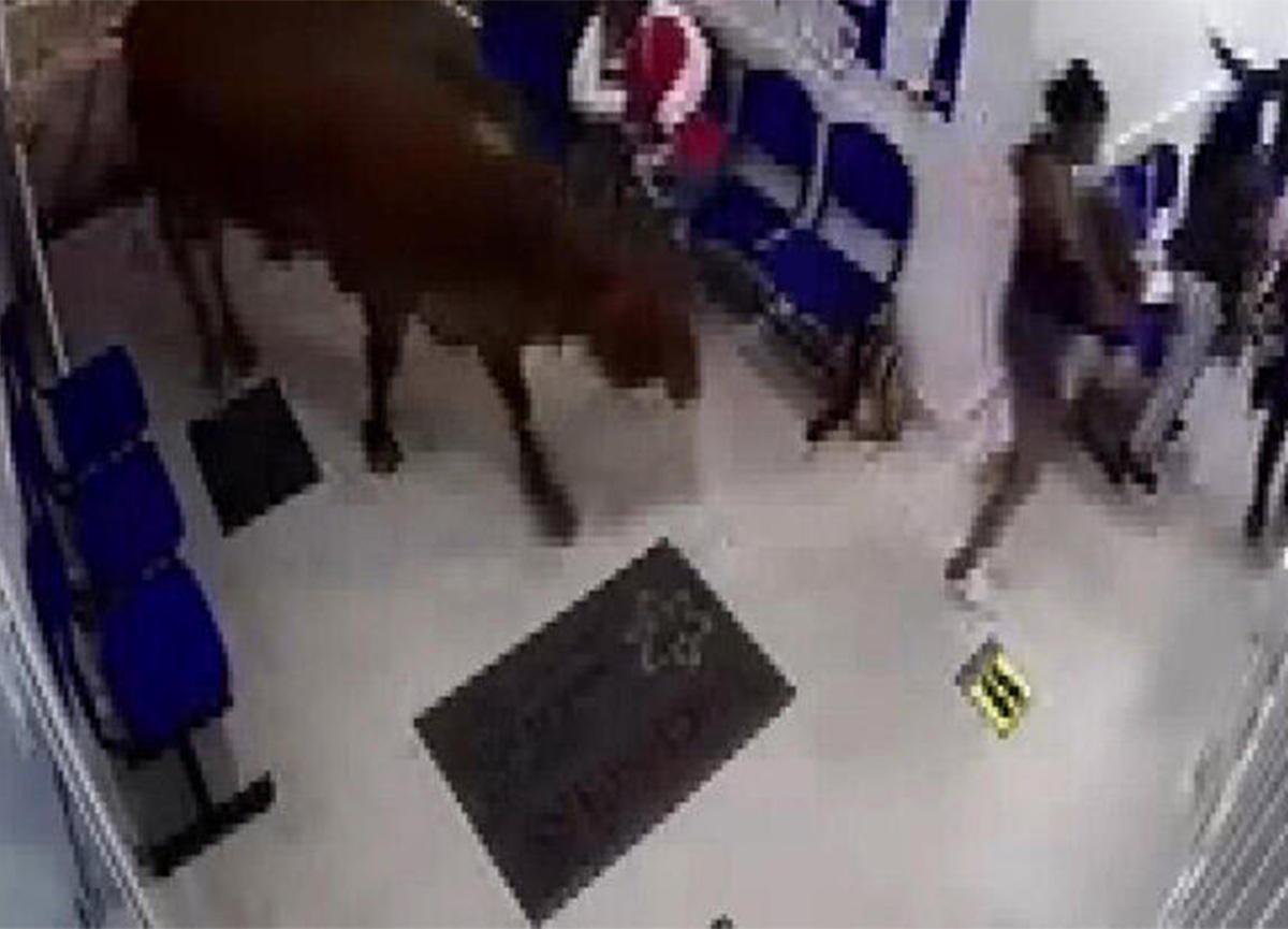 Yolunu kaybeden inek, hastaneye daldı! 4 kişi yaralandı