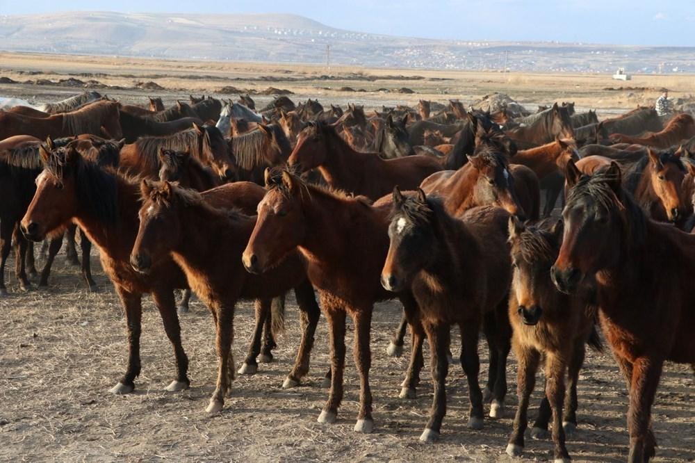 Yılkı atlarıyla ünlü 'Hürmetçi Sazlığı' fotoğraf tutkunlarının yeni gözdesi