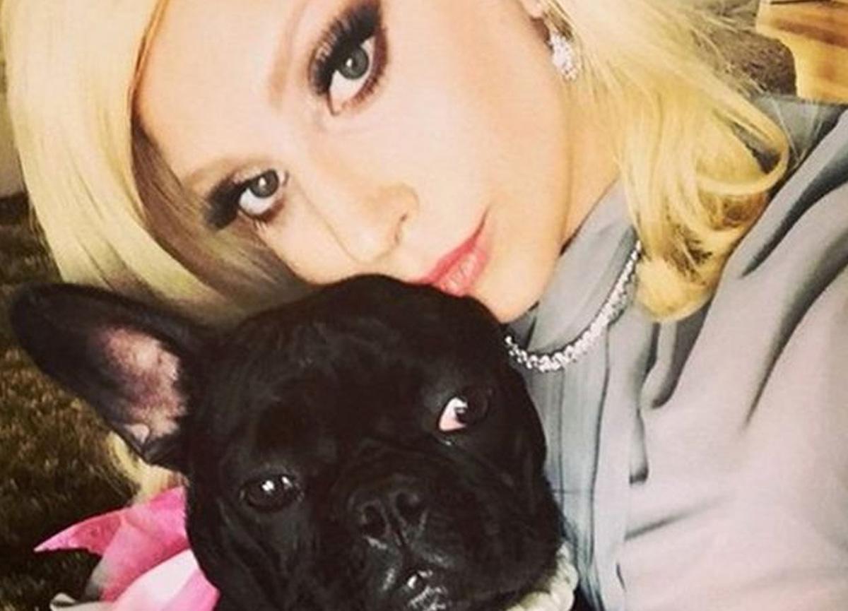 Lady Gaga'nın köpekleri kaçırıldı: Getirene 500 bin dolar ödül vaat edildi