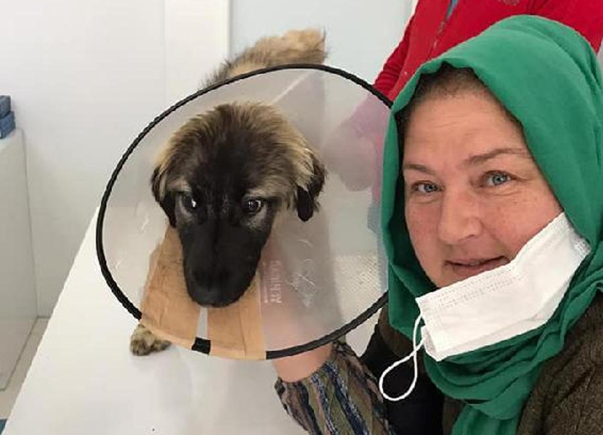 Traktörün çarptığı köpeğin veteriner masraflarını sigorta şirketi karşıladı