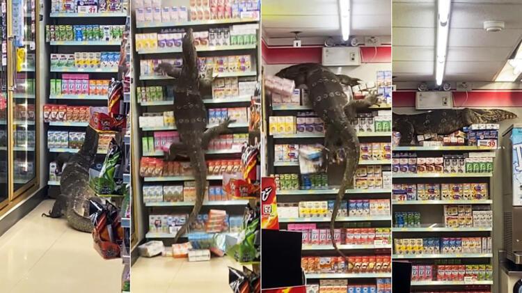 Müşteri bu görüntüleri markette çekti! Dev kertenkele...