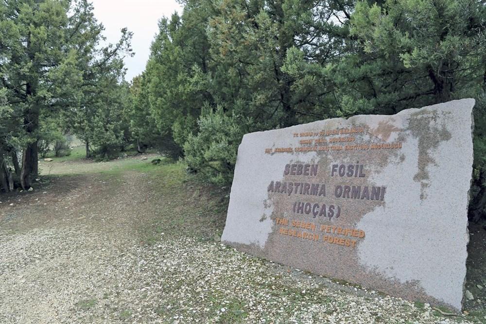 Türkiye'nin ilk fosil ormanı UNESCO yolunda