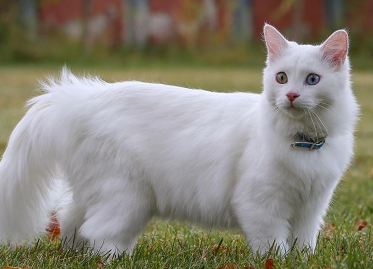 Bir ilk yaşandı! İngiltere'de bir kedi Covid-19 nedeniyle öldü