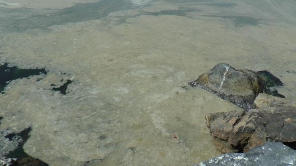 Kartal'da başlayan deniz salyası istilası Pendik Sahillerine kadar geldi