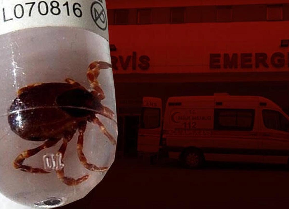 Kırım Kongo Kanamalı Ateşi kâbusu geri döndü! Belirtileri koronavirüse benziyor