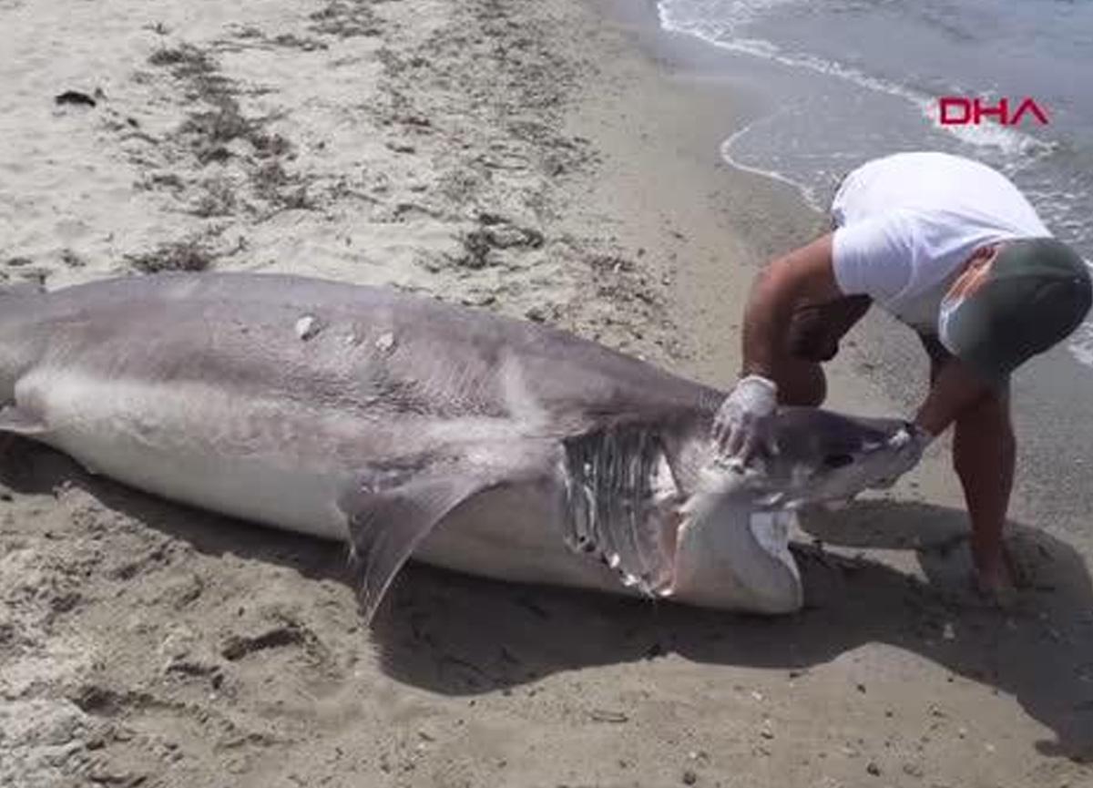 Kuşadası'nda sahile ölü köpekbalığı vurdu