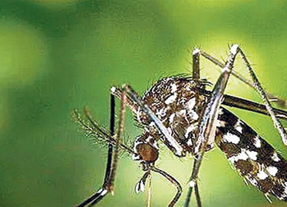 Sivrisinekten bulaşan virüs uyarısı! Tedavisi yok