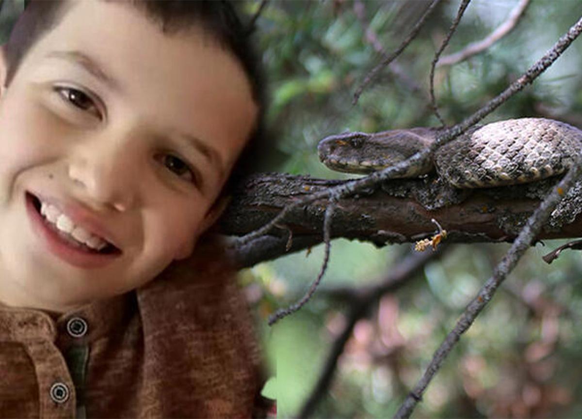 Aydın'da korku dolu anlar! 8 yaşındaki Alperen Oktay'ı yılan ısırdı