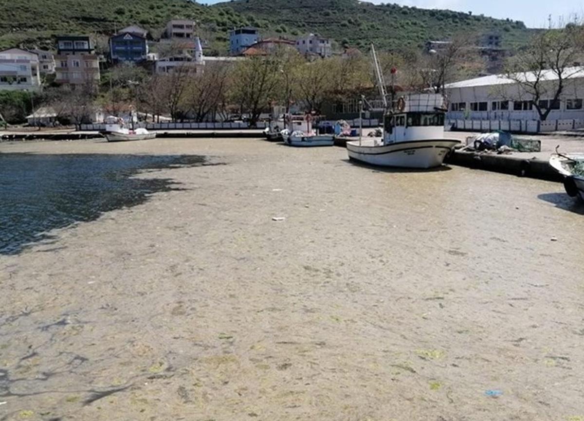Marmara'daki en büyük çevre sorunu müsilaj için rekor imza toplandı!