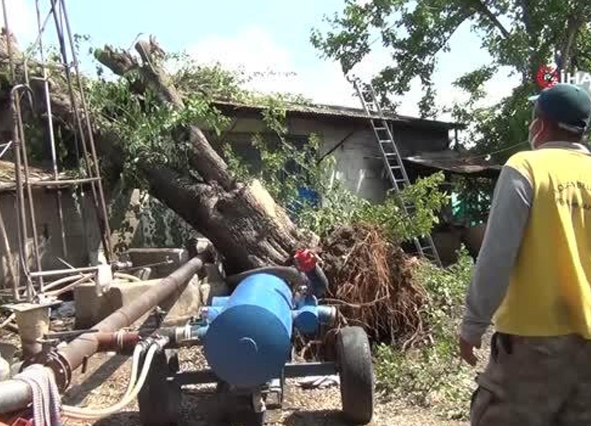 Yarım asırlık dut ağacı fırtınada evin üstüne devrildi