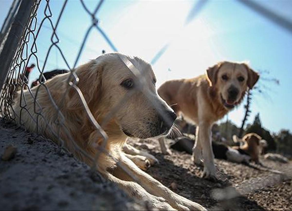 Çok konuşulan Hayvan Hakları yasa teklifi TBMM'deki komisyondan geçti ve yasalaştı